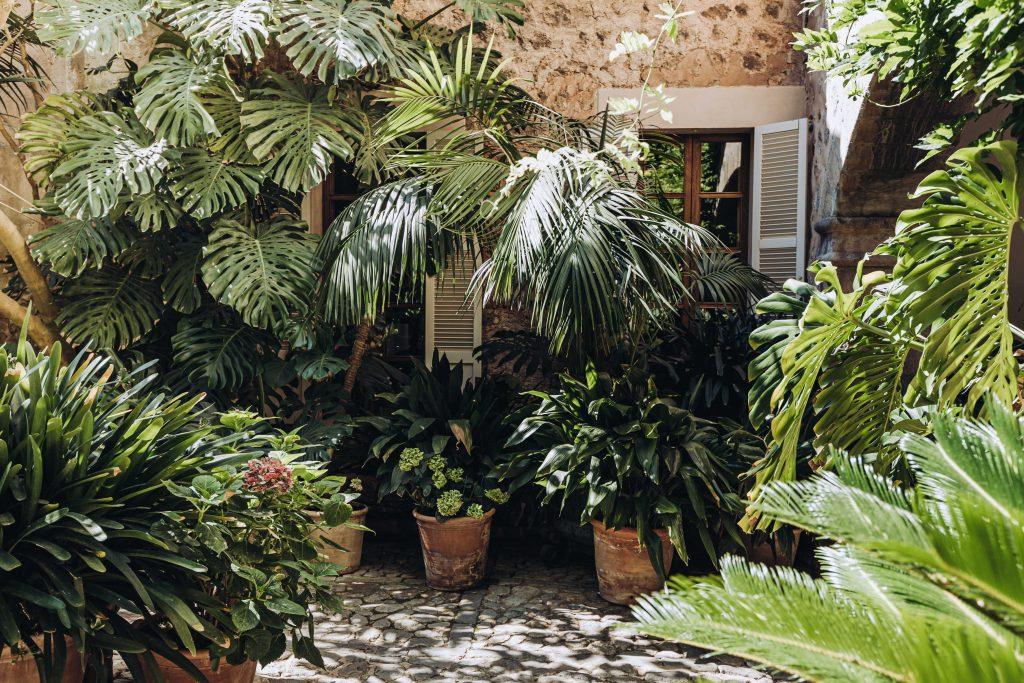 avenue-soller-valley-plants