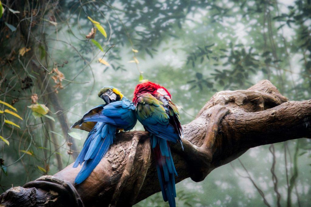 parrots-things-to-do-jpg-jpg-2