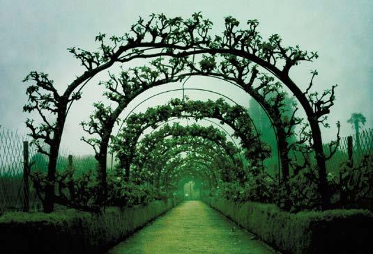 avenue-boconnoc-lost-gardens-of-heligan-jpg-jpg