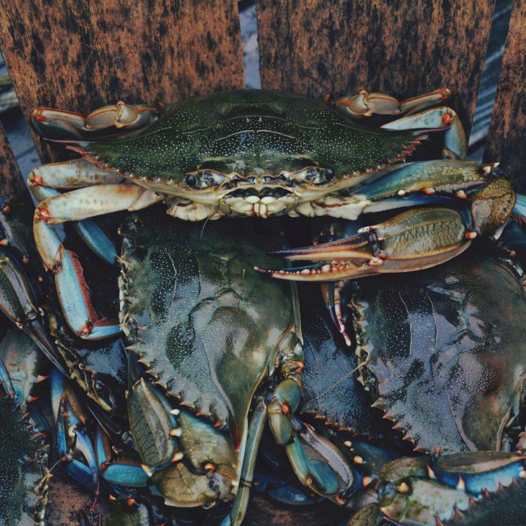 crabs-jpg-jpg