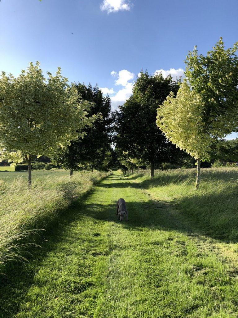 hammilton-house-countryside-interiors-exterior-jpg-jpg-9