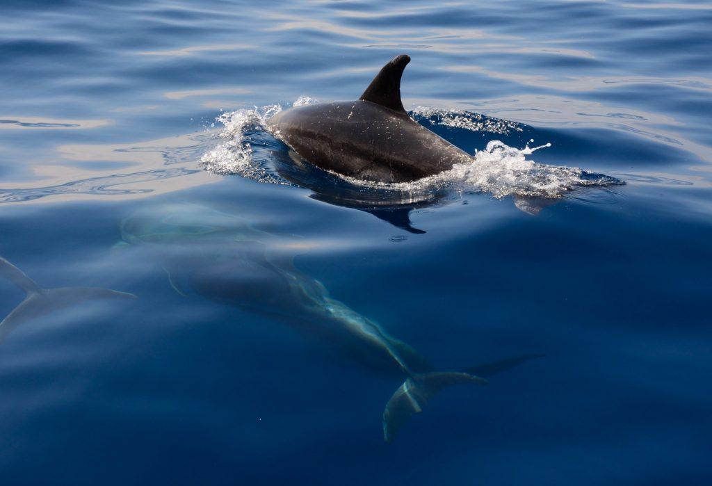 dolphins-spain162234774060b30fdc2b0b1-jpg