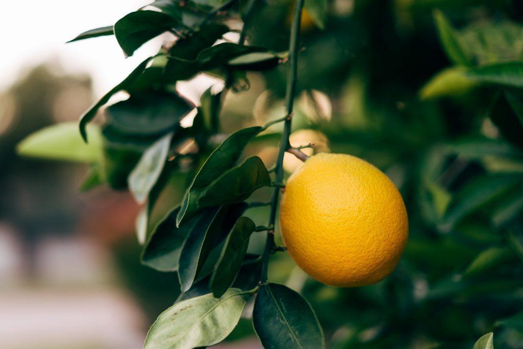 oranges-162235632260b331621816c-jpg