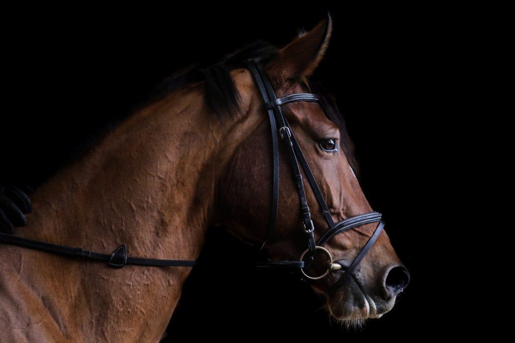 horses-things-to-do162237073060b369aab3654-jpg