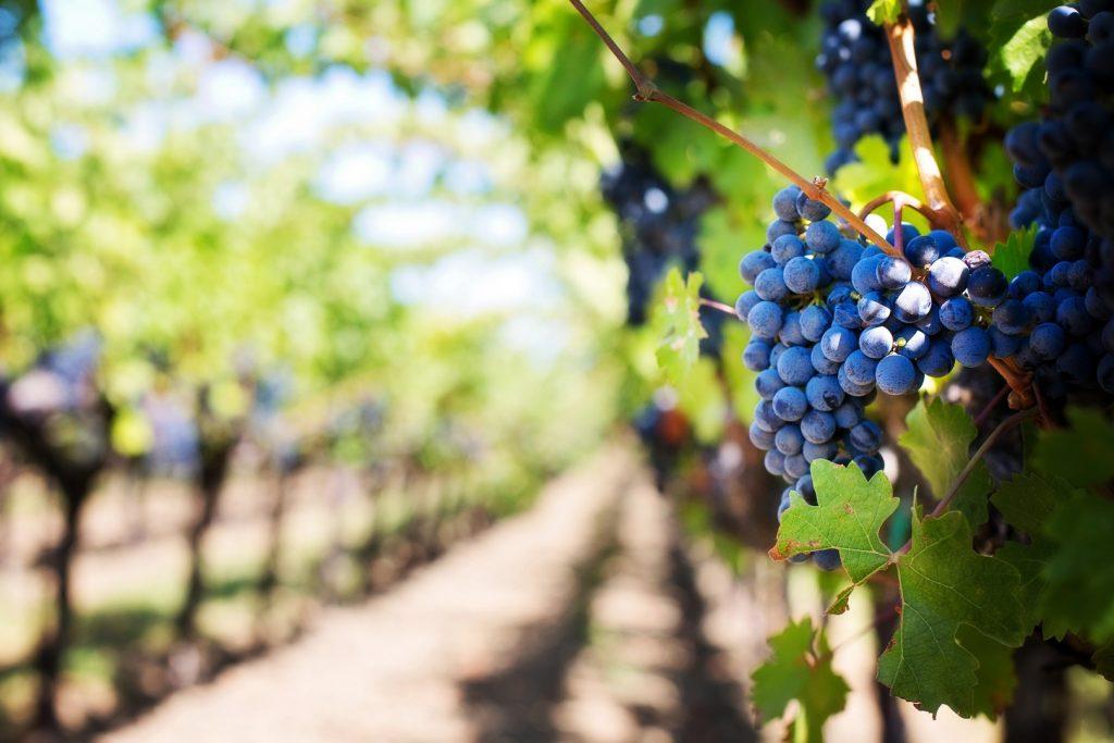 wine-things-to-do162237177560b36dbf52696-jpg