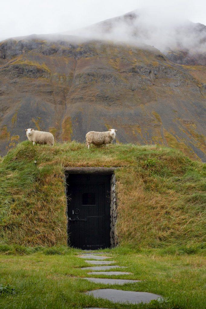 deplar-farm-exterior-sheep162239386360b3c40792082-jpg