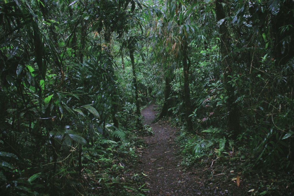 costa-rica-jungle-162244934360b49cbf9c8c4-jpg
