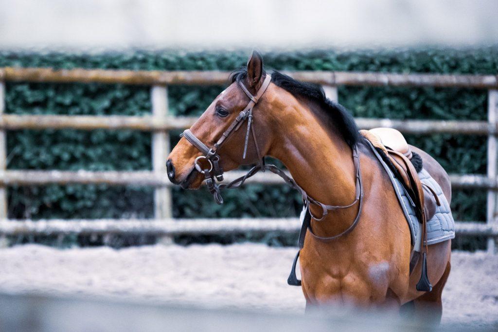 horseriding-2162245198560b4a71163a83-jpg