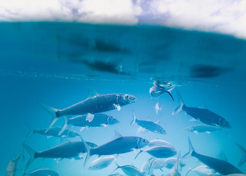fish-things-to-do162245241760b4a8c121993-jpg