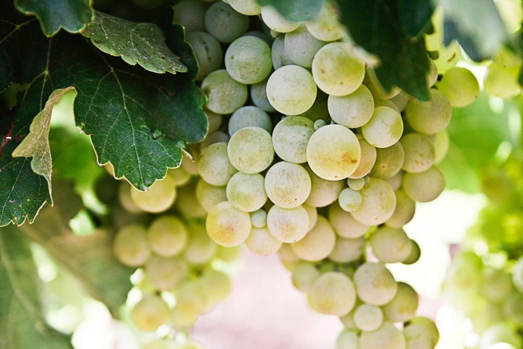 wine-things-to-do162255413360b63615c7d51-jpg